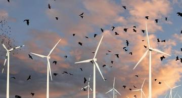 Ultrasonic technology helps protect bats at wind sites