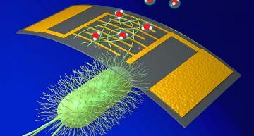 Highly sensitive bioelectronic gas sensor is low cost, renewable