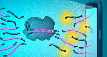 CRISPR-based test for COVID-19 uses smartphone camera