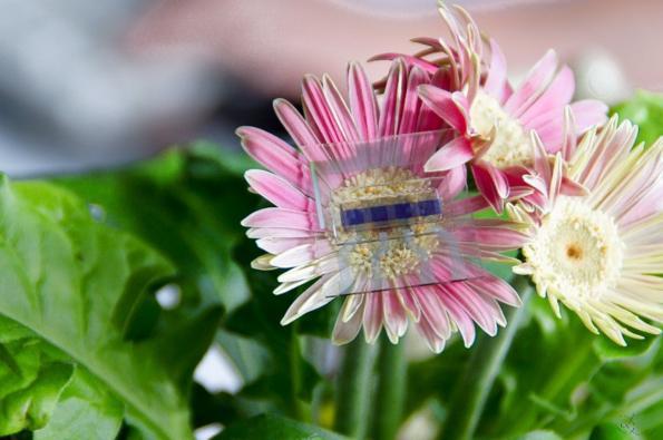 Organic solar cell emits light
