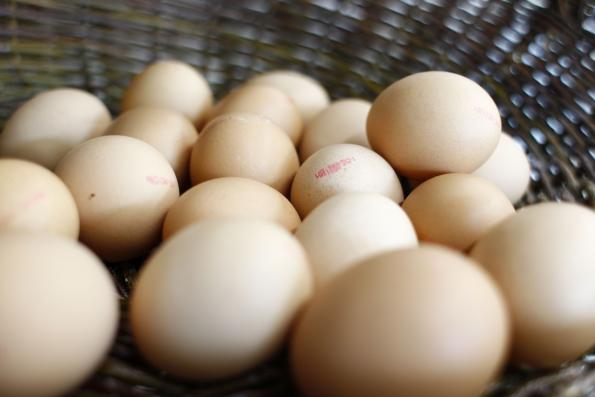 Chicken eggshells, a cost-effective material for energy storage