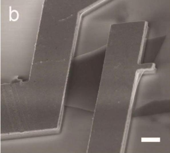 Piezoelectricity in a 2-D semiconductor holds promise for future MEMS
