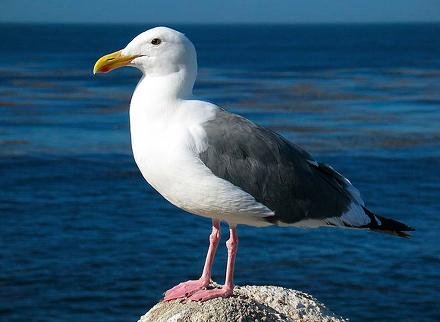 OmniVision shareholders approve Seagull takeover