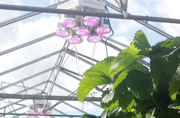 Plessey sees greener pastures in horticultural lighting