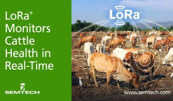 LoRa wireless tech monitors cattle health in real time
