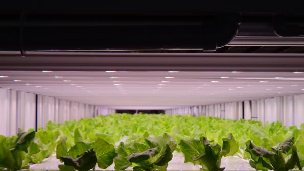 7-Eleven Japanese customers to benefit from Philips' horticultural lighting