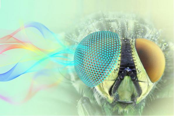 3D-printed metamaterials offer unique optical properties