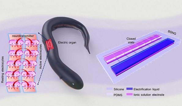Stretchable nanogenerator works underwater