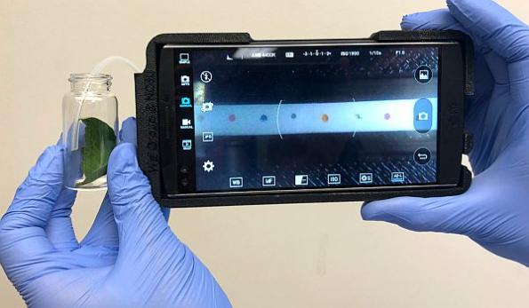Smartphone-based plant pathogen sensor detects disease in the field