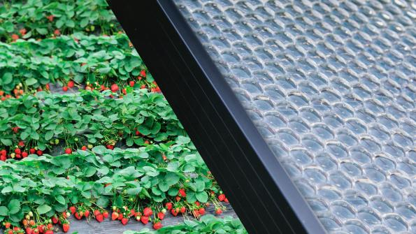 Insolight in Lausanne has raised $5m to commercialise its translucent, sun-tracking solar panel technology for agrivoltaic smart agriculture