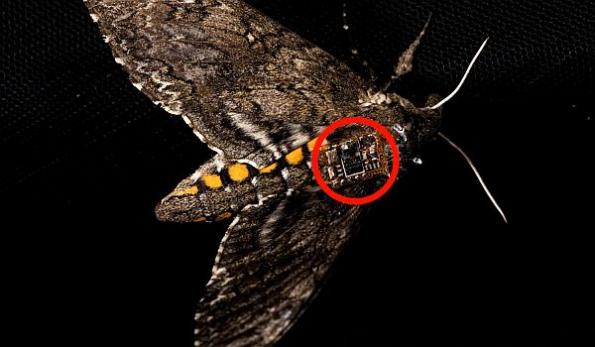 Airdropping sensors from drones and insects