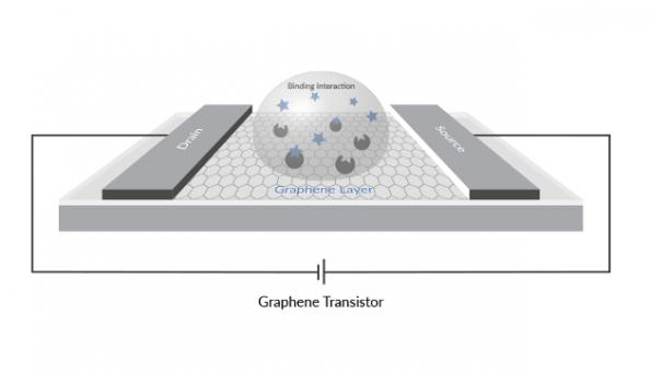 Biological sensing transistor made available for Covid-19 testing