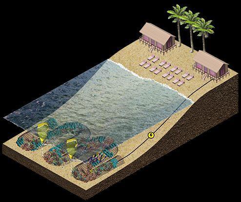 CCell Renewables et Vicor collaborent pour alimenter la culture de nouveaux récifs coralliens