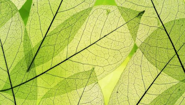 Artificial leaf produces methanol, oxygen from carbon dioxide