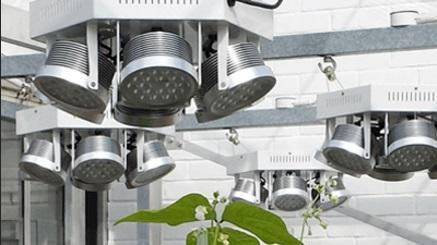 Plessey va produire des LED adaptées à la culture des plantes sous serre