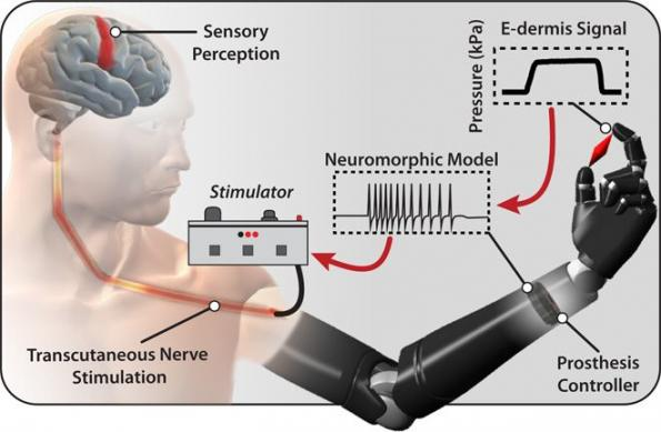 Electronic skin brings sense of touch to prosthetic users