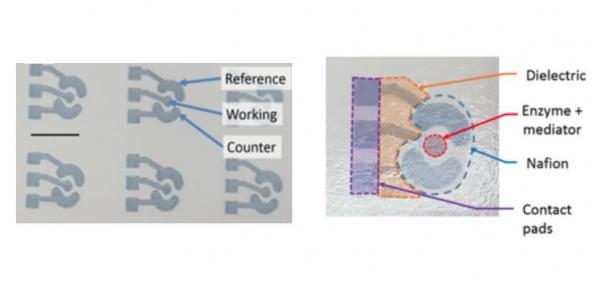 All printed paper glucose sensor is metal-free