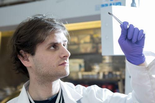 Replacing lead in flexible perovskite solar cells