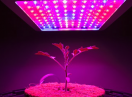 IoT in plant growing operations | Mouser